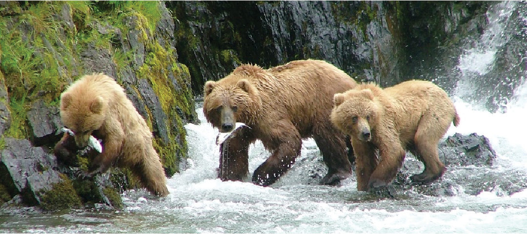 Bears and Wild Places